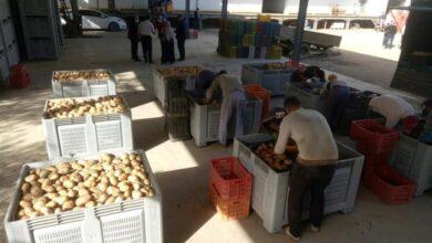 صورة لكسر المضاربة.. إغراق الأسواق الوطنية بـ 10 آلاف طن من البطاطا